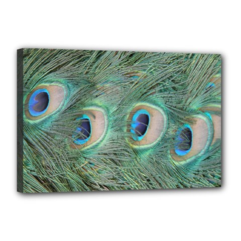 Peacock Feathers Macro Canvas 18  X 12  by GiftsbyNature