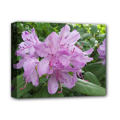 Purple Rhododendron Flower Deluxe Canvas 14  X 11  by picsaspassion