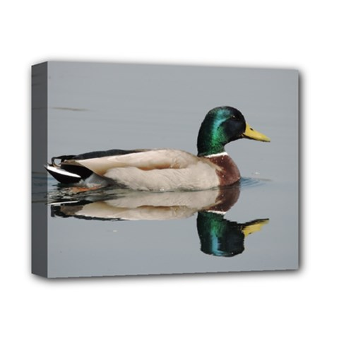 Wild Duck Swimming In Lake Deluxe Canvas 14  X 11  by picsaspassion