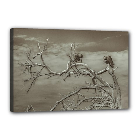 Vultures At Top Of Leaveless Tree Canvas 18  X 12  by dflcprints