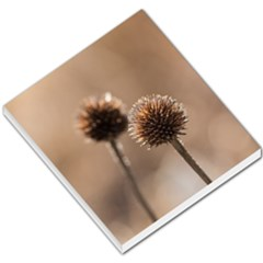 Withered Globe Thistle In Autumn Macro Small Memo Pads by wsfcow