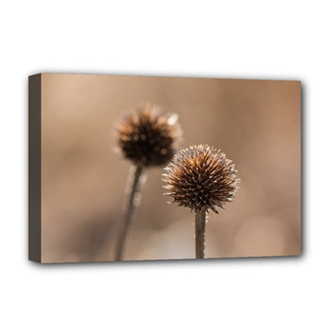 Withered Globe Thistle In Autumn Macro Deluxe Canvas 18  X 12   by wsfcow