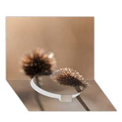 Withered Globe Thistle In Autumn Macro Circle Bottom 3d Greeting Card (7x5) by wsfcow
