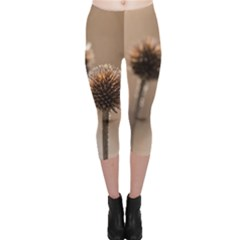 Withered Globe Thistle In Autumn Macro Capri Leggings  by wsfcow