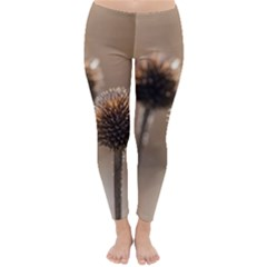 Withered Globe Thistle In Autumn Macro Winter Leggings  by wsfcow