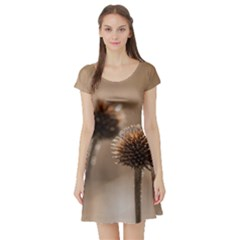 Withered Globe Thistle In Autumn Macro Short Sleeve Skater Dress by wsfcow