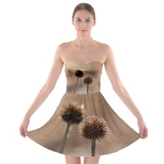 Withered Globe Thistle In Autumn Macro Strapless Bra Top Dress by wsfcow