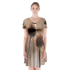 Withered Globe Thistle In Autumn Macro Short Sleeve V Neck Flare Dress by wsfcow