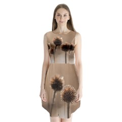 Withered Globe Thistle In Autumn Macro Sleeveless Chiffon Dress   by wsfcow