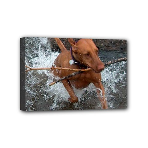 Vizsla Fetching In Water Mini Canvas 6  x 4  by TailWags