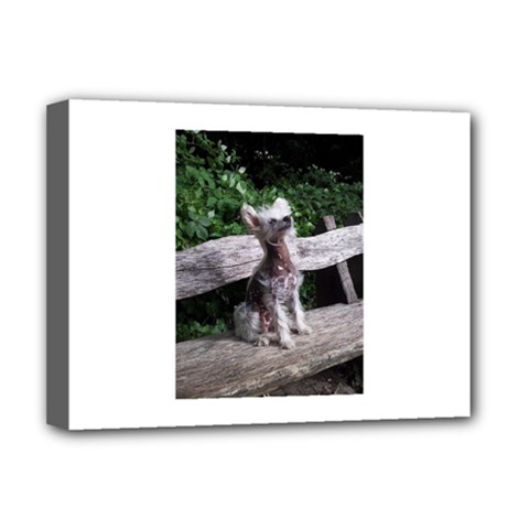 Chinese Crested Dog Sitting 2 Deluxe Canvas 16  X 12   by TailWags