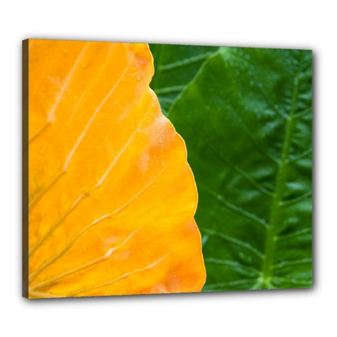 Wet Yellow And Green Leaves Abstract Pattern Canvas 24  X 20