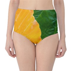 Wet Yellow And Green Leaves Abstract Pattern High Waist Bikini Bottoms by Amaryn4rt