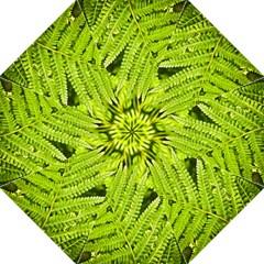 Fern Nature Green Plant Golf Umbrellas by Nexatart