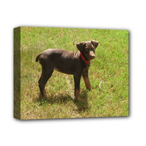 Red Doberman Puppy Deluxe Canvas 14  x 11