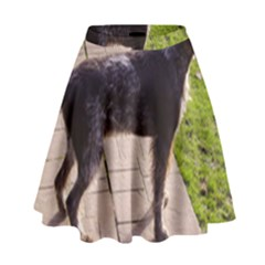German Wirehaired Pointer Full High Waist Skirt by TailWags