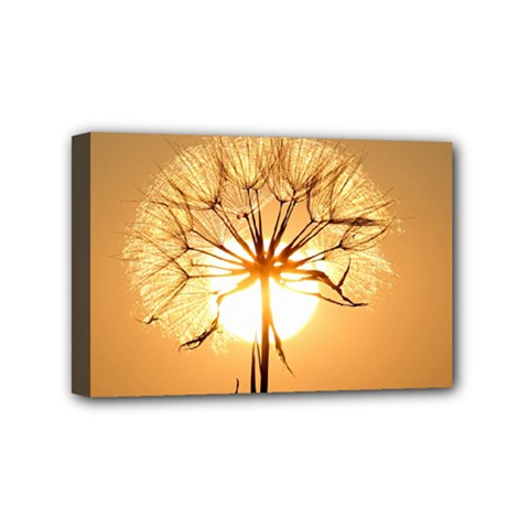 Dandelion Sun Dew Water Plants Mini Canvas 6  x 4  by Nexatart