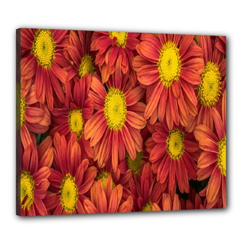 Flowers Nature Plants Autumn Affix Canvas 24  X 20  by Nexatart