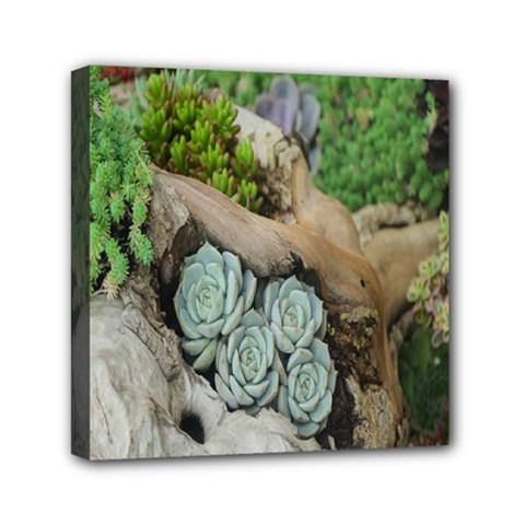 Plant Succulent Plants Flower Wood Mini Canvas 6  X 6  by Nexatart