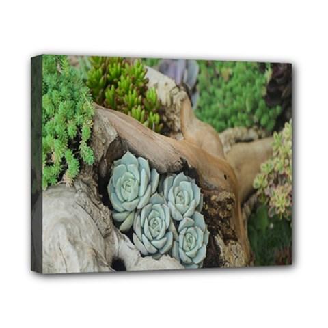 Plant Succulent Plants Flower Wood Canvas 10  X 8  by Nexatart