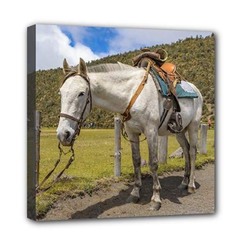 White Horse Tied Up At Cotopaxi National Park Ecuador Mini Canvas 8  X 8  by dflcprints