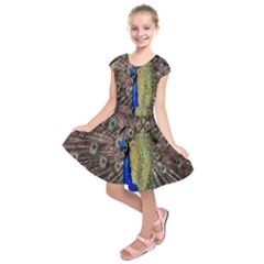 Multi Colored Peacock Kids  Short Sleeve Dress