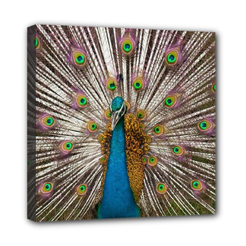 Indian Peacock Plumage Mini Canvas 8  X 8  by Simbadda