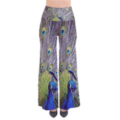 Peacock Bird Feathers Pants by Simbadda