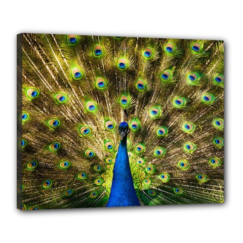 Peacock Bird Canvas 20  X 16  by Simbadda