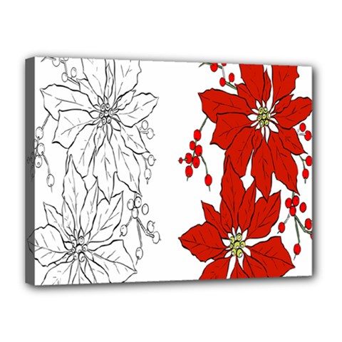 Poinsettia Flower Coloring Page Canvas 16  X 12  by Simbadda