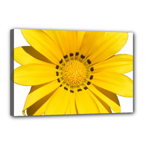 Transparent Flower Summer Yellow Canvas 18  X 12  by Simbadda