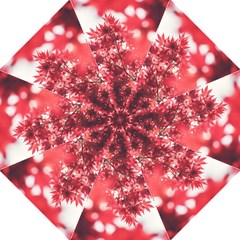 Maple Leaves Red Autumn Fall Folding Umbrellas by Onesevenart