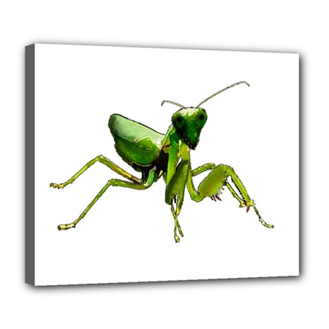 Mantis Deluxe Canvas 24  X 20   by Valentinaart