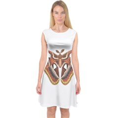 Butterfly Animal Insect Isolated Capsleeve Midi Dress by Simbadda