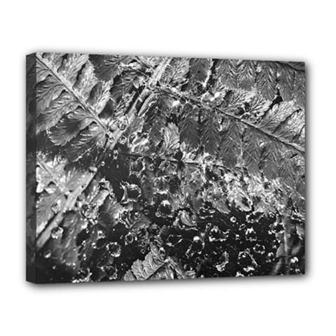 Fern Raindrops Spiderweb Cobweb Canvas 14  X 11  by Simbadda