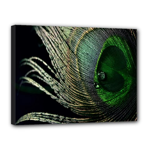 Feather Peacock Drops Green Canvas 16  X 12  by Simbadda