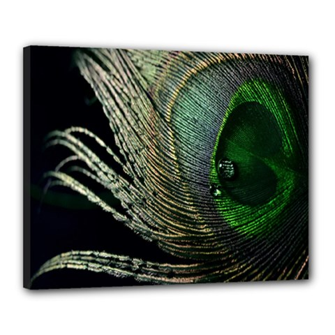 Feather Peacock Drops Green Canvas 20  X 16