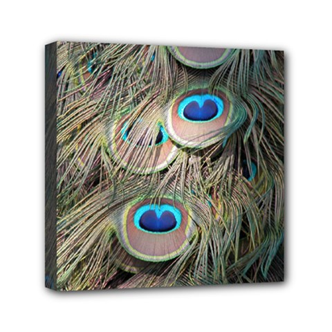 Colorful Peacock Feathers Background Mini Canvas 6  X 6  by Simbadda
