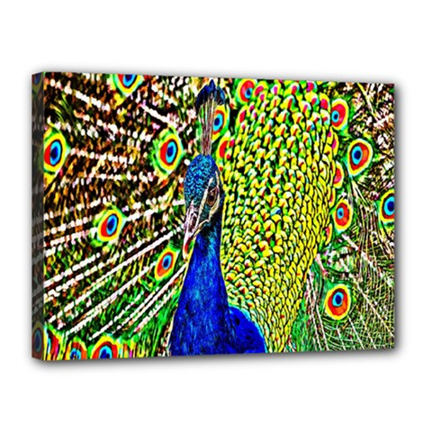 Graphic Painting Of A Peacock Canvas 16  X 12  by Simbadda