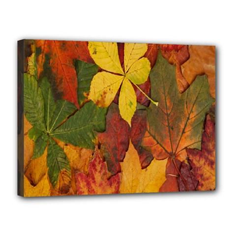 Colorful Autumn Leaves Leaf Background Canvas 16  X 12  by Amaryn4rt