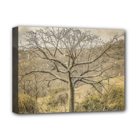 Ceiba Tree At Dry Forest Guayas District   Ecuador Deluxe Canvas 16  X 12   by dflcprints