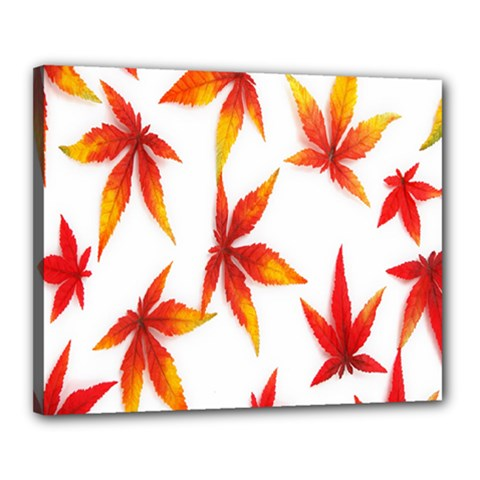 Colorful Autumn Leaves On White Background Canvas 20  X 16  by Simbadda