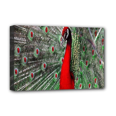 Red Peacock Deluxe Canvas 18  X 12   by Simbadda