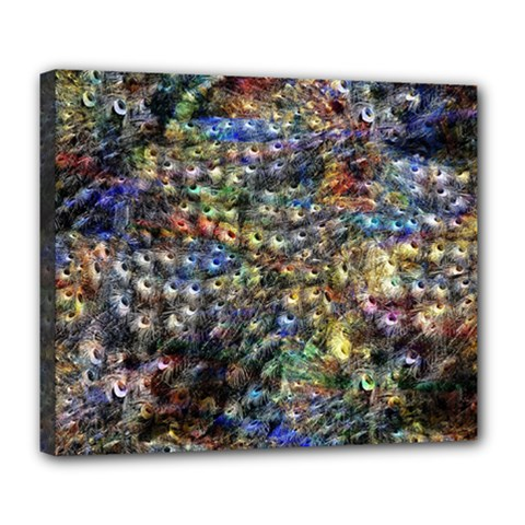 Multi Color Peacock Feathers Deluxe Canvas 24  X 20   by Simbadda