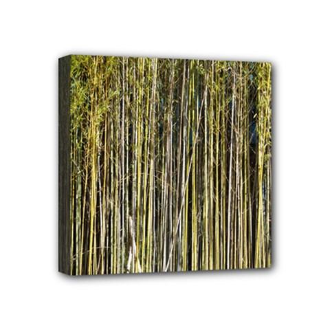 Bamboo Trees Background Mini Canvas 4  X 4  by Nexatart