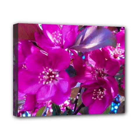 Pretty In Fuchsia Canvas 10  X 8  by dawnsiegler