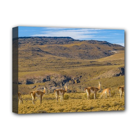 Group Of Vicunas At Patagonian Landscape, Argentina Deluxe Canvas 16  X 12   by dflcprints