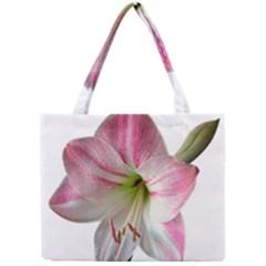 Flower Blossom Bloom Amaryllis Mini Tote Bag by Nexatart