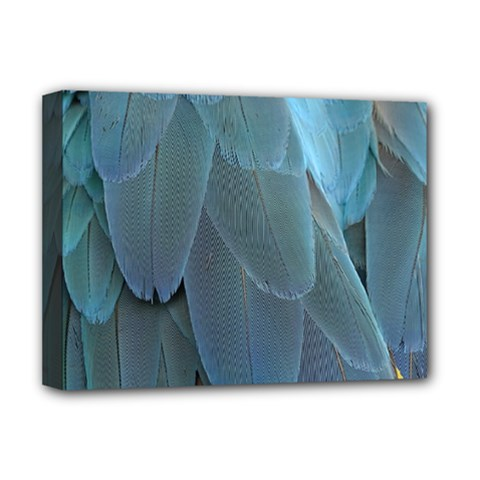 Feather Plumage Blue Parrot Deluxe Canvas 16  X 12   by Nexatart