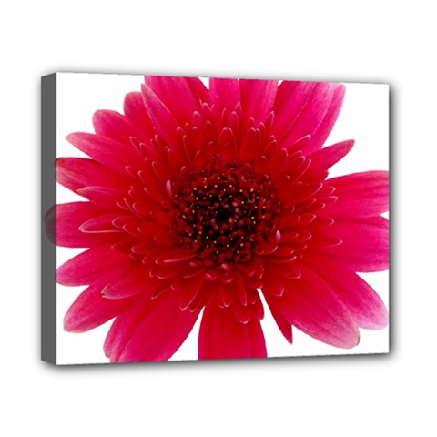 Flower Isolated Transparent Blossom Canvas 10  X 8  by Nexatart